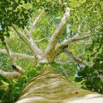 ZonnepanelenPlus partner van Trees for All!