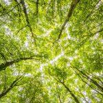 Nieuw Trees for All certificaat voor ZonnepanelenPlus!
