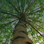 Ook in 2021 werkt ZonnepanelenPlus mee aan een groenere wereld samen met Trees for All!